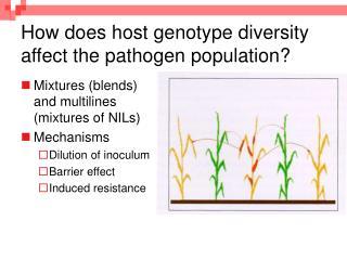 How does host genotype diversity affect the pathogen population