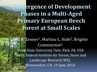 Convergence of Development Phases in a Multi-Aged Primary European Beech Forest at Small Scales