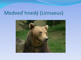 Medveď hnedý (Linnaeus)