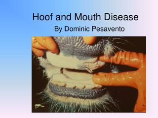 Hoof and Mouth Disease