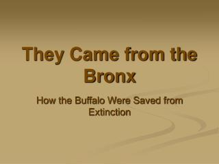 They Came from the Bronx