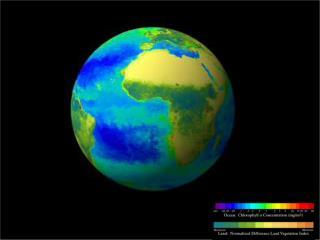 Einwirkung von Umweltfaktoren auf die Entwicklung des Phytoplankton im Südpolarmeer