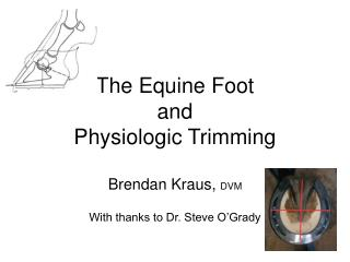 The Equine Foot  and Physiologic Trimming