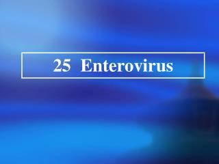25  Enterovirus