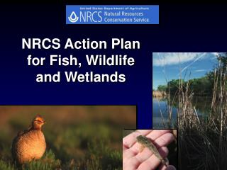 Fish  Wildlife Action Plan