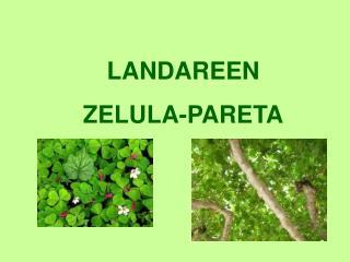 LANDAREEN ZELULA-PARETA