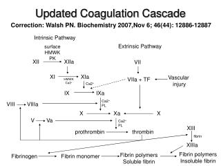 Updated Coagulation Cascade