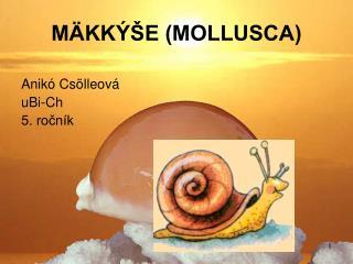 MÄKKÝŠE (MOLLUSCA)