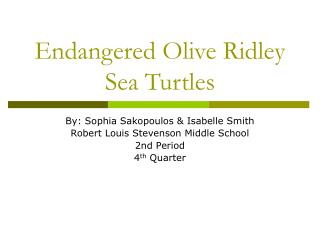 Endangered Olive Ridley Sea Turtles