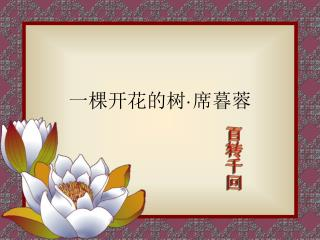 一棵开花的树 · 席暮蓉