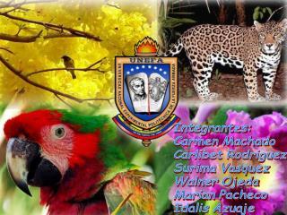 Integrantes: Carmen Machado Carlibet Rodriguez Surima Vasquez Walner Ojeda Marian Pacheco
