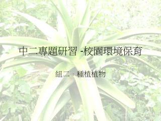 中二專題研習  - 校園環境保育