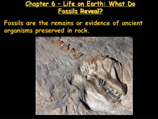 Chapter 6   Life on Earth: What Do Fossils Reveal