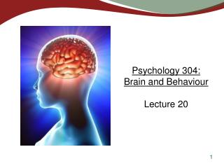 Psychology 304:  Brain and Behaviour Lecture 20