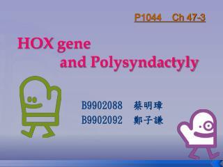 HOX  gene             and  Polysyndactyly
