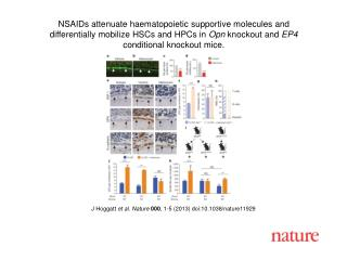 J Hoggatt  et al.  Nature  000 , 1-5 (2013) doi:10.1038/nature 11929