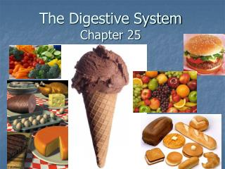 The Digestive System Chapter 25
