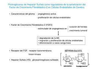 Características del glioma:  - angiogénesis activa - proliferación de células endoteliales