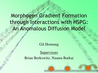 Morphogen Gradient Formation through Interactions with HSPG: An Anomalous Diffusion Model