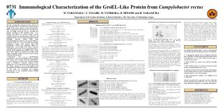 Immunological Characterization of the GroEL-Like Protein from  Campylobacter rectus