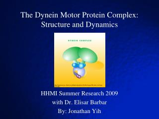 The Dynein Motor Protein Complex: Structure and Dynamics