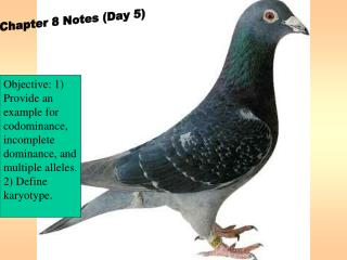 Chapter 8 Notes (Day 5)