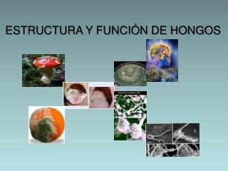 ESTRUCTURA Y FUNCIÓN DE HONGOS