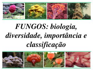 FUNGOS: biologia, diversidade, import�ncia e classifica��o