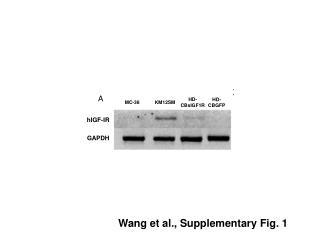 Wang et al., Supplementary Fig. 1