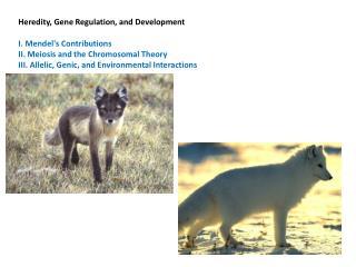 Heredity, Gene Regulation, and Development  I. Mendel's Contributions