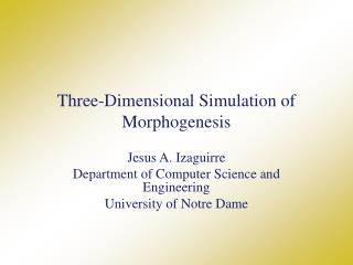 Three-Dimensional Simulation of Morphogenesis