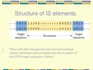 Structure of IS elements.