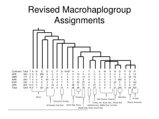 Revised  Macrohaplogroup  Assignments