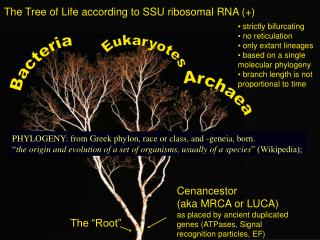 The Tree of Life according to SSU ribosomal RNA (+)