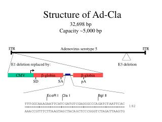 Structure of Ad-Cla