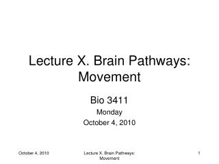 Lecture X. Brain Pathways: Movement