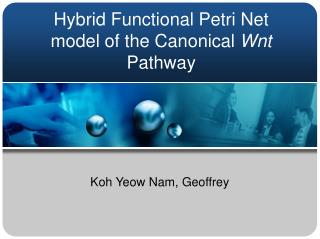 Hybrid Functional Petri Net model of the Canonical  Wnt  Pathway
