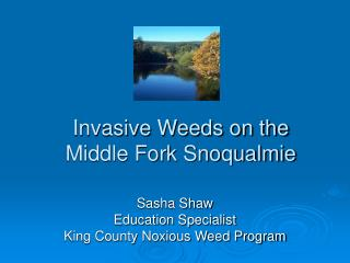 Invasive Weeds on the Middle Fork Snoqualmie
