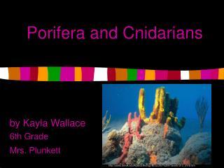 Porifera and Cnidarians
