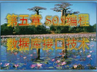 第 五 章  SQL 编程 数据库接口技术