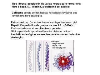 Estructural : tej. Conectivo, hueso, cartílago, tendones, piel.