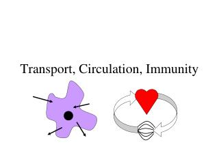 Transport, Circulation, Immunity