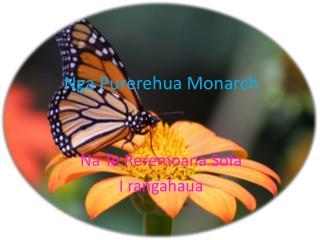 Nga  P urerehua  Monarch