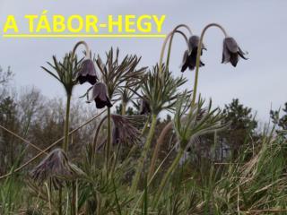 A TÁBOR-HEGY