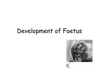 Development of Foetus