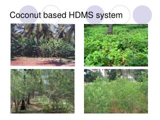Coconut based HDMS system