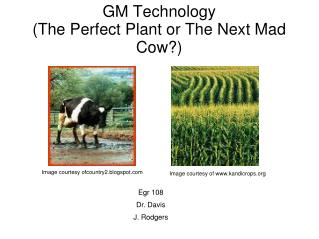 GM Technology The Perfect Plant or The Next Mad Cow