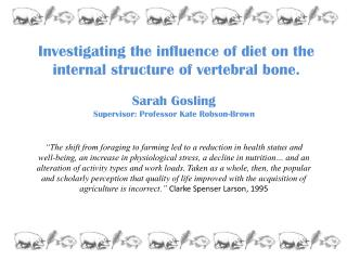 Investigating the influence of diet on the internal structure of vertebral bone.