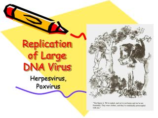 Replication of Large DNA Virus