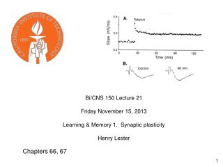 Bi/CNS 150 Lecture 21       Friday November 15, 2013 Learning & Memory 1.  Synaptic plasticity